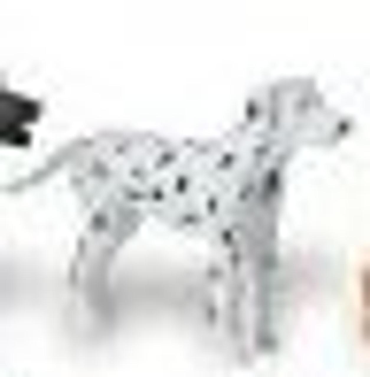 Dalmatian--Adult