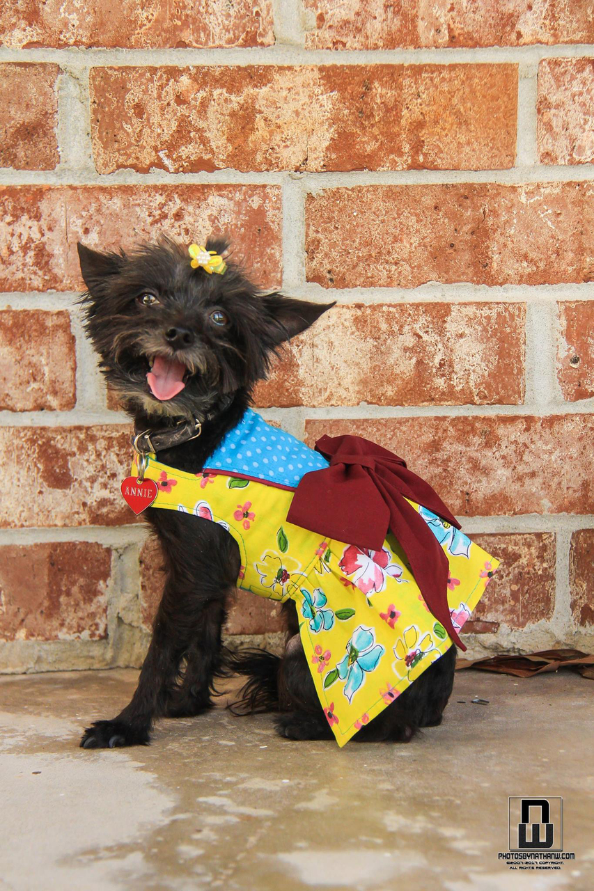Azalea's Piped Panel Dress for Small and Large Breed Dogs PDF Pattern