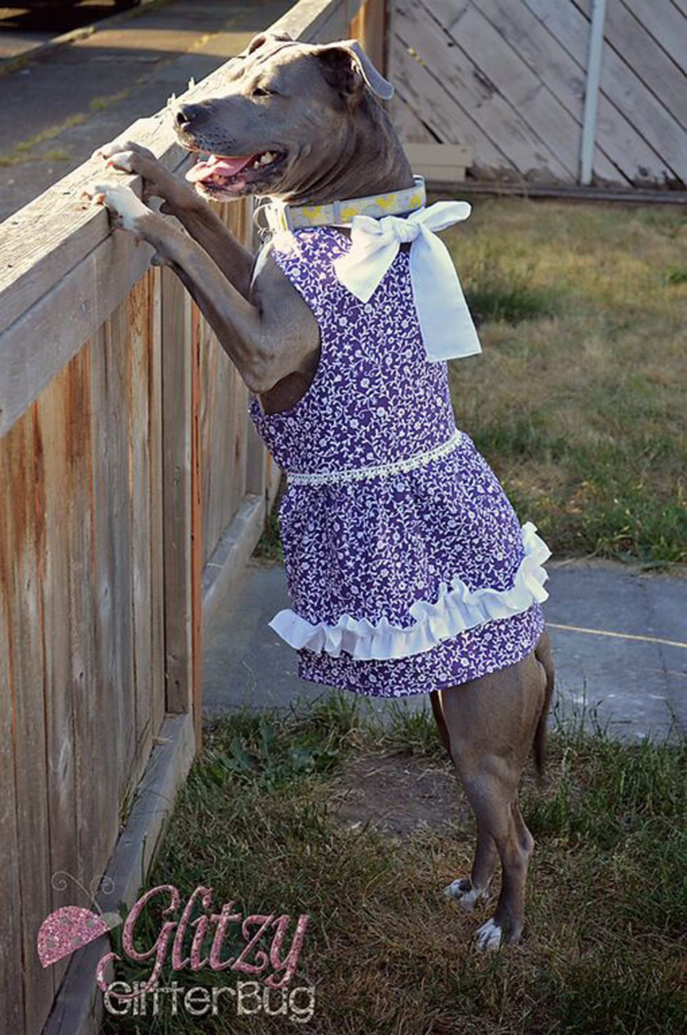 Anna's Sweetheart Halter Dress for Small and large Breed Dogs PDF Pattern