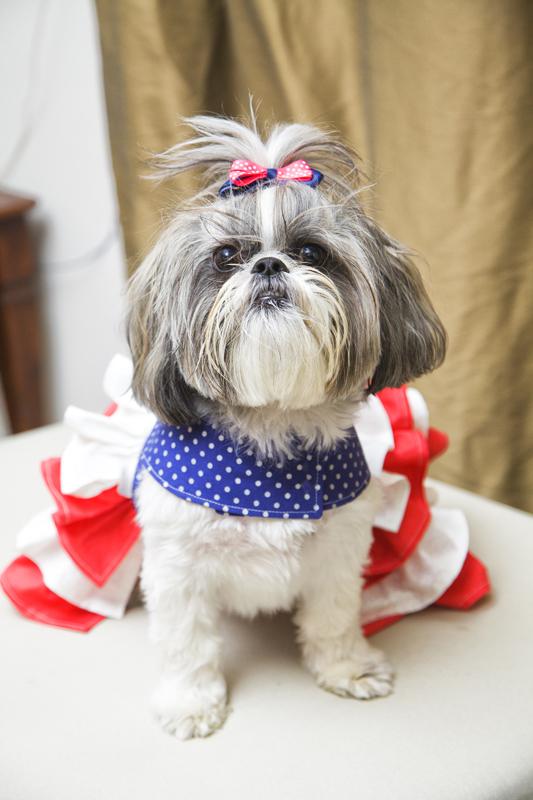 Primrose's Ruffled Corset Princess Dress for Small Breed Dogs PDF Pattern