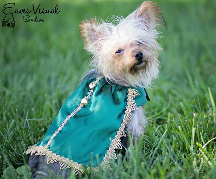 Cameron's Cape Set for Small Breed Dogs PDF Pattern