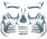 Skull Face Transfer Tattoo - image arriere