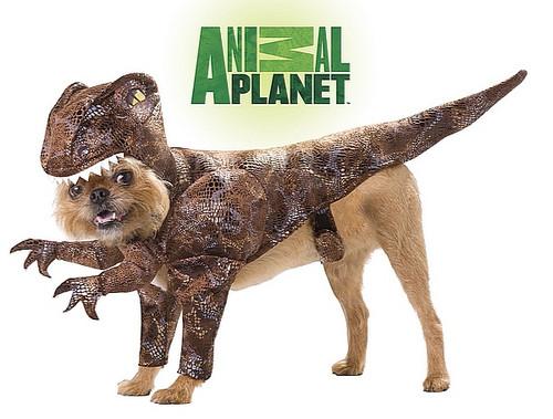 Costume de Dinosaure Velociraptor pour animal