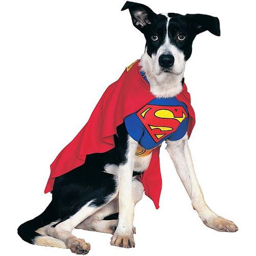 Costume pour animaux de Superman