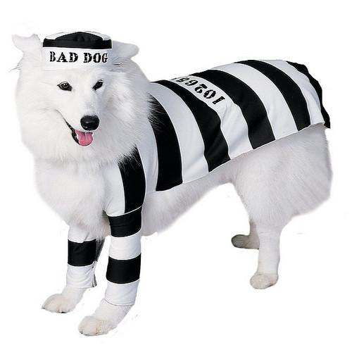 Costume pour Animaux de Prisonnier