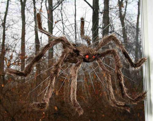 Araignée Brise Vitre Brune de 30 pouces