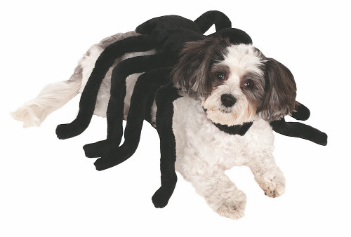 Harnais Araignée pour Animal