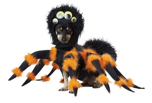 Costume d'Araignée pour Chien