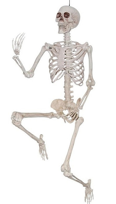 38 inch Skeleton