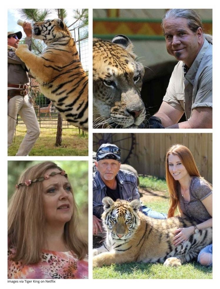 Tigre Blog
