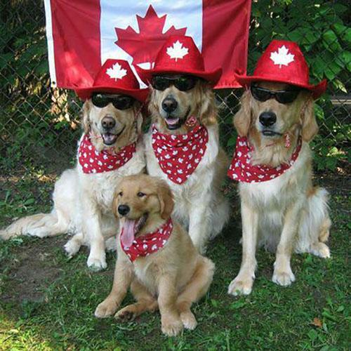 Costume de chiens pour le jour du Canada avec Chapeau