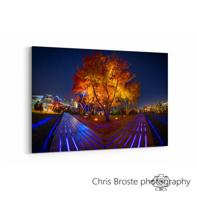 Side view of photographic art of the trees on top of Gold Medal Park in fall.