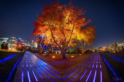 Photograph of the trees on top of Gold Medal Park in fall.