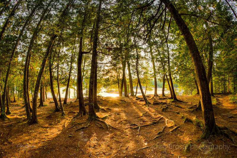The Boundary Waters forest of northern Minnesota with a warm glow through the trees.