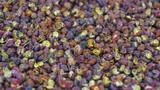 Spices by La Boite- Sichuan Peppercorns