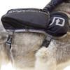 Close up of UD Dog Vest on a husky