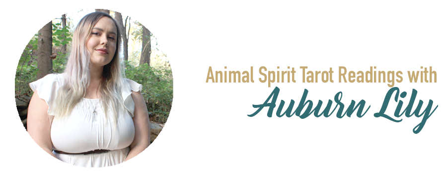 animal-spirit-tarot-readings-wild-unknown-kim-krans-auburn-lily-asheville-nc1.png