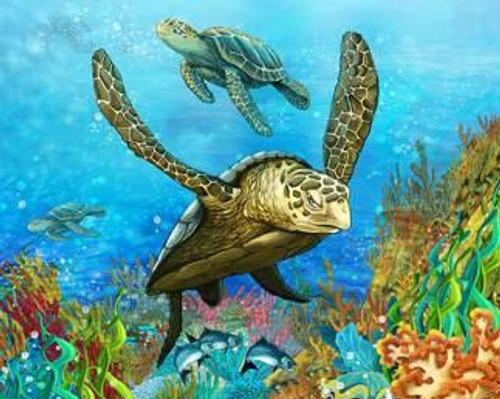 Sea Turtle Framed Canvas Print