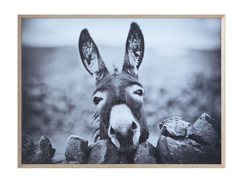 Donkey Framed Canvas Print
