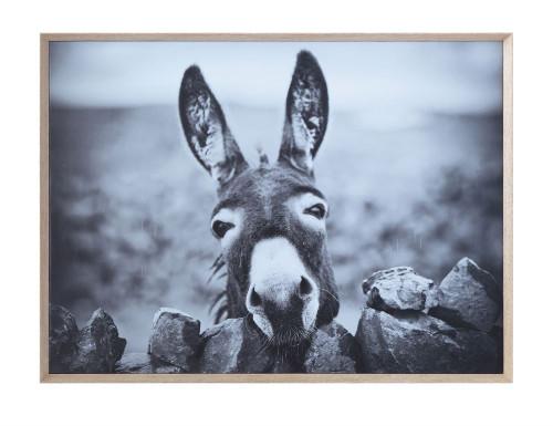 Donkey Framed Canvas Print