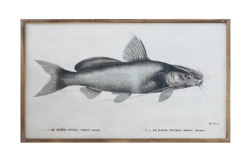 Framed Vintage Catfish Wall Decor