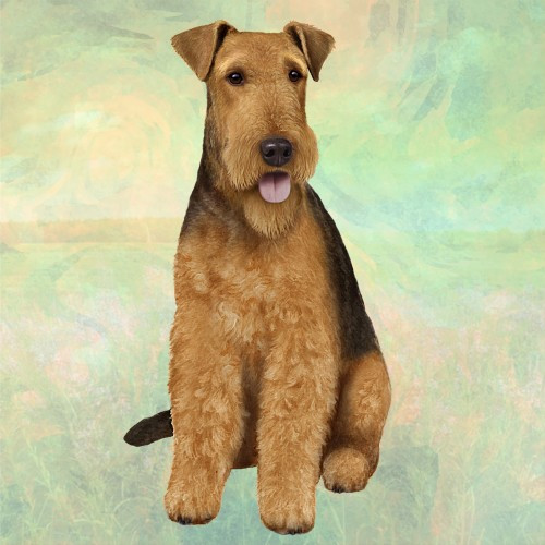 Airedale Stone Coaster