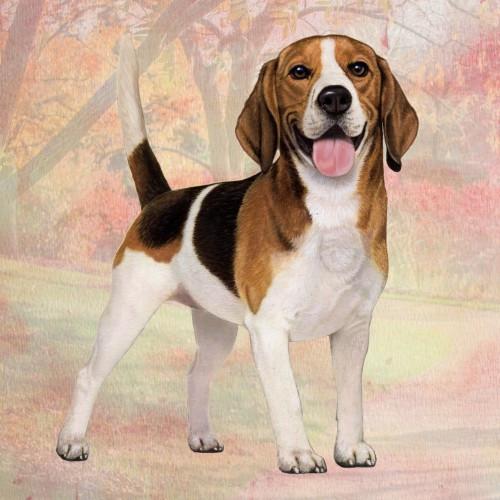 Beagle Stone Coaster