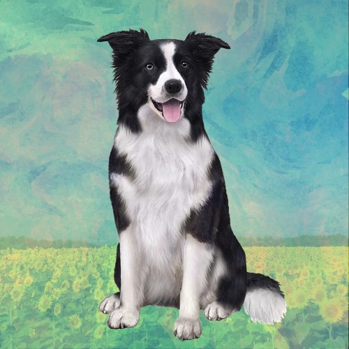 Border Collie Sitting Stone Coaster