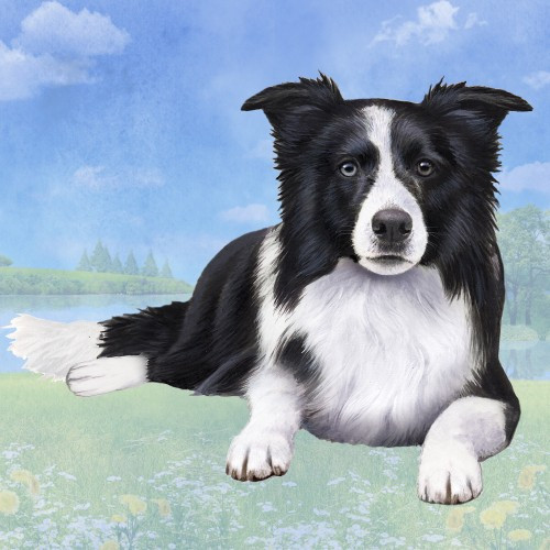 Border Collie Laying Down Stone Coaster