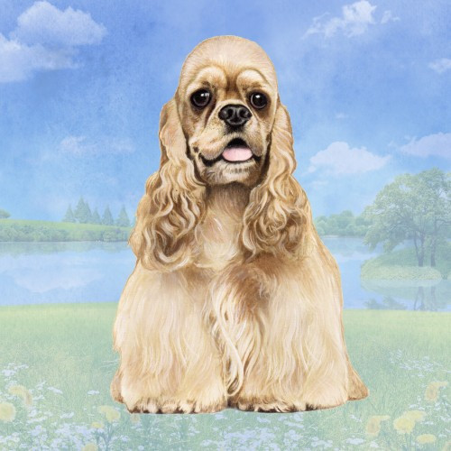 Cocker Spaniel, Blonde Stone Coaster