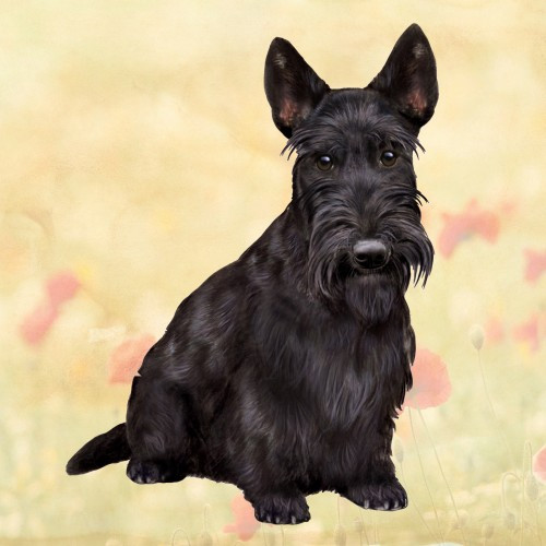 Scottish Terrier Stone Coaster
