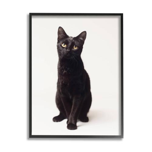 Black Cat Framed Art