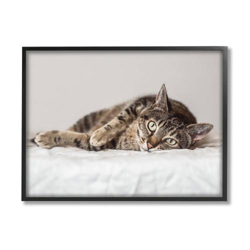 Brown Tabby Relaxed Framed Art