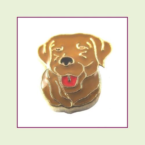 Dog - Lab Chocolate (Gold Base) Floating Charm