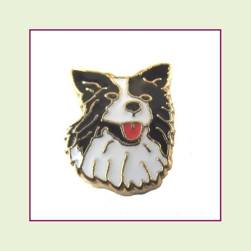 Dog - Border Collie (Gold Base) Floating Charm