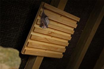 Simon King Bat Rack