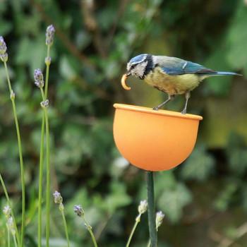 Bird Feeder Cup -Metal Flower bed feeder in Orange