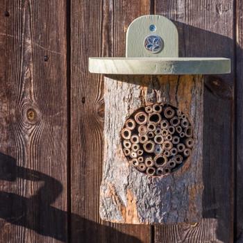 Wicken Fen Bee Log