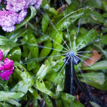 Mixed Border spray irrigation - 50mtr