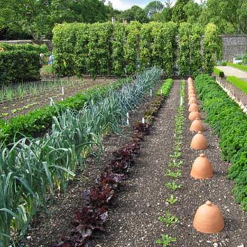 Vegetable Patch - Small Pack