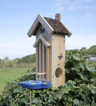 Butterfly Feeder / Habitat