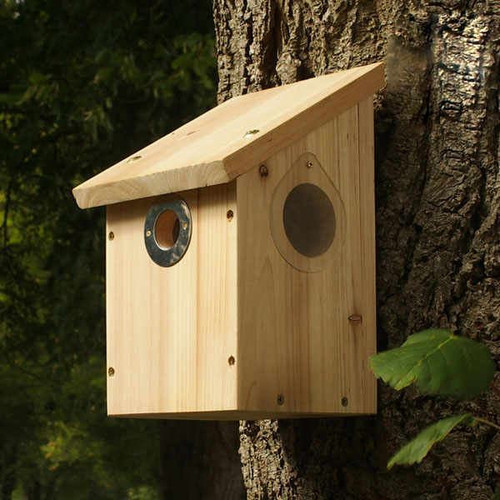 Camera Bird Nestbox