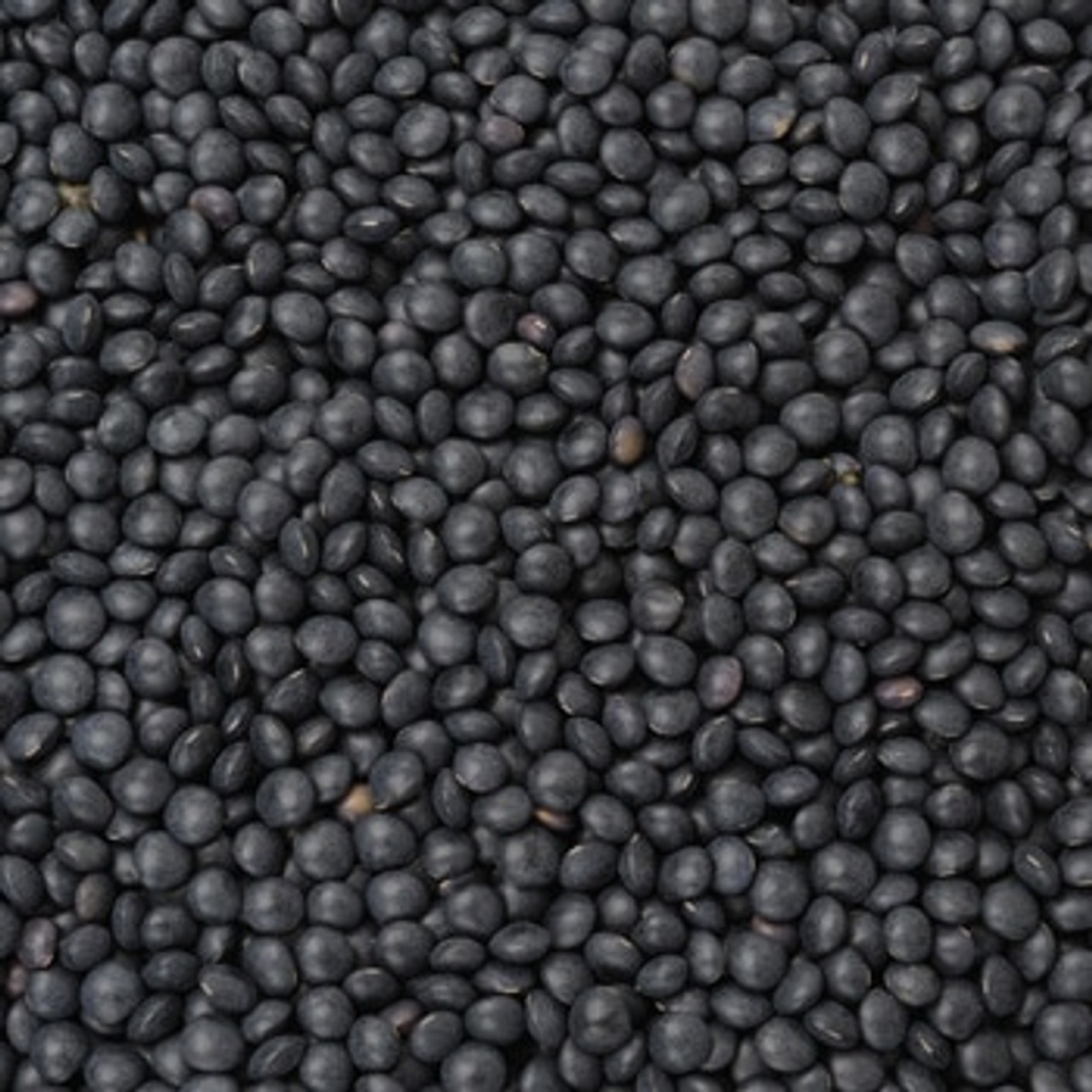 Bulk Organic Black Beluga Lentils 25kg Pre Order Item Fresco Wholefoods