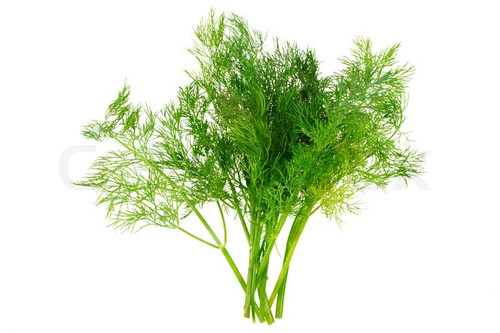 Dill Organic Per Bunch (Coolibah)