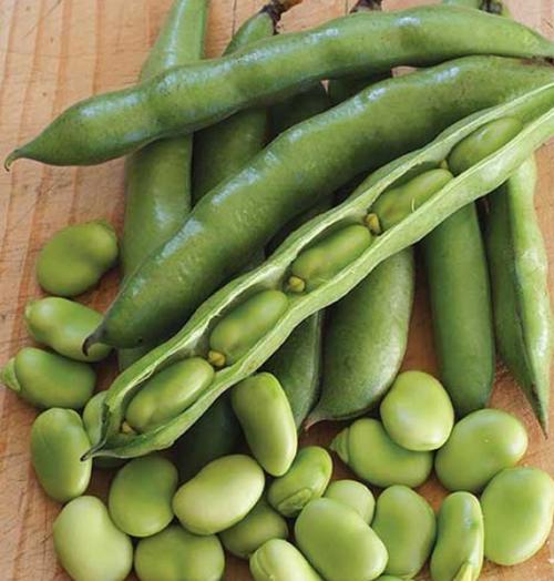 Beans Broad Organic Box 5kg (Efrosinis)