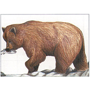 Maple Leaf Nfaa Animal Faces Group 1 Grizzly