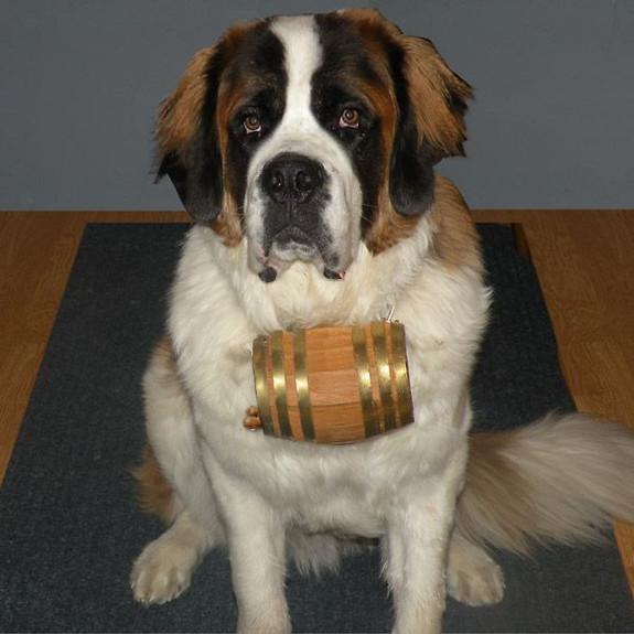 Saint Bernard Dog Collar Barrel