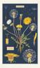 Dandelion Vintage Tea Towel
