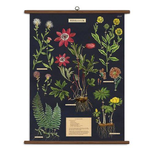 Herbarium Vintage School Chart