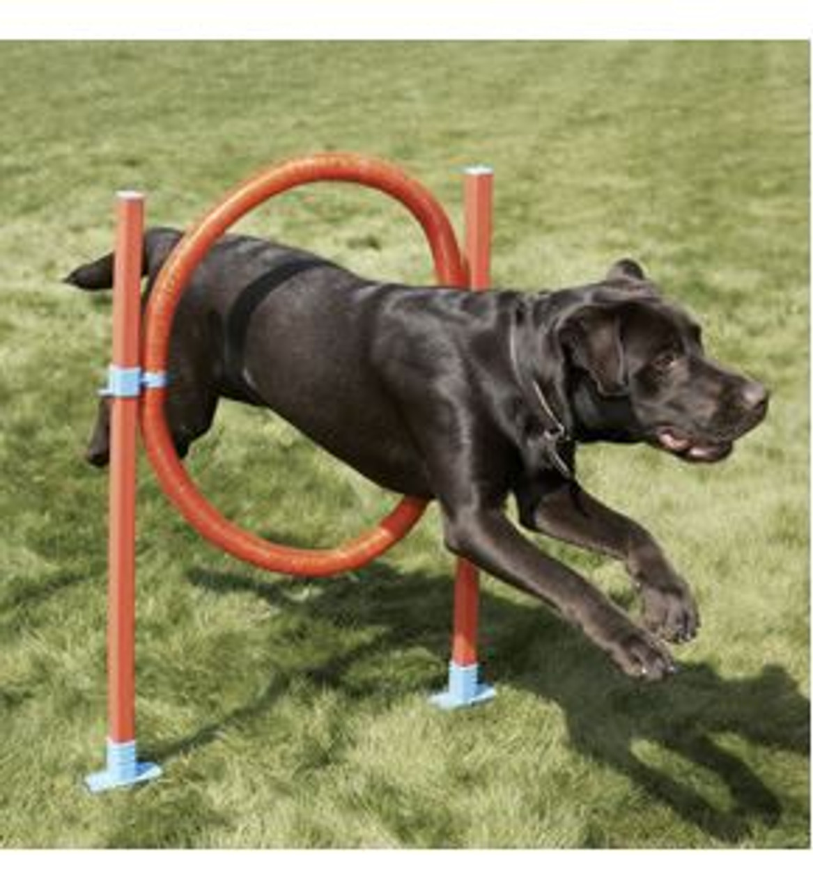 Easy Assemble Dog Pet Agility Hoop With 6 Height Positions Fun Exercise.